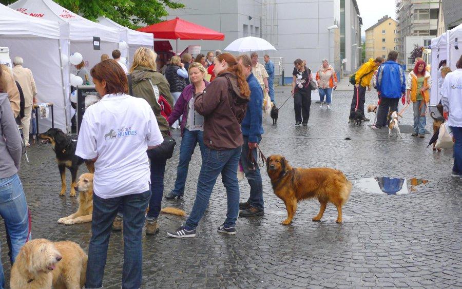 Tag des Hundes' an der Universität Gießen