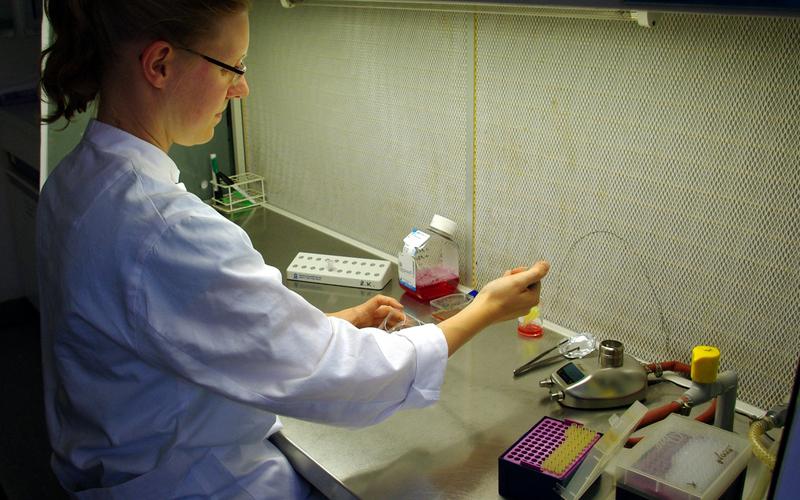 Doktorandin Nicole Steffensen kultiviert im Labor die Schwannzellen, die in Chanels Rückenmark transplantiert werden sollen