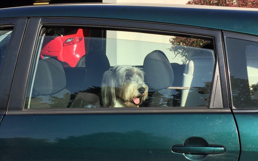 Im sommer kann das auto zur hitzefallewerden bei intensiver sonnenstrahlung reicht auch ein - Fenster geht nicht zu ...