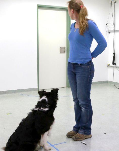 Der Hund folgt den Blicken von Wallis zur Tür