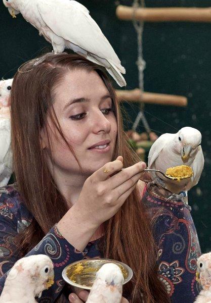 Cornelia Habl erforscht den Werkzeuggebrauch von Goffin-Kakadus.