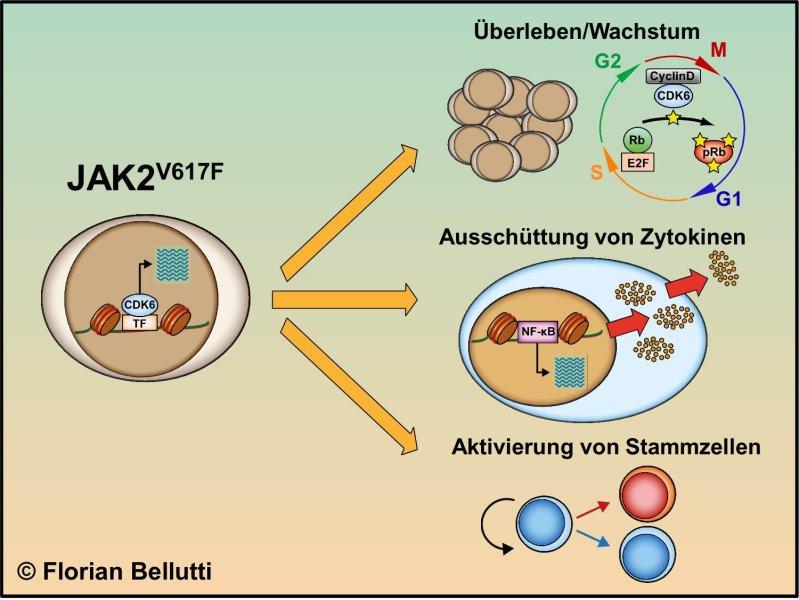 Zusammenfassung der Aktionspunkte des mutierten Faktors JAK2V617F