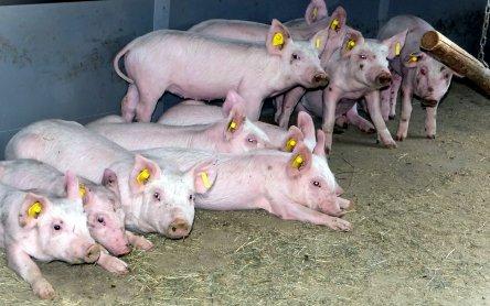 Erdwärmetauscher schützt Nutztiere im Stall vor Klimawandel am ...