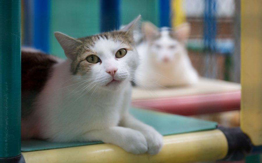Tierheime im Check: Körperlicher Zustand von Tierheimkatzen lässt auf Haltungsbedingungen schließen