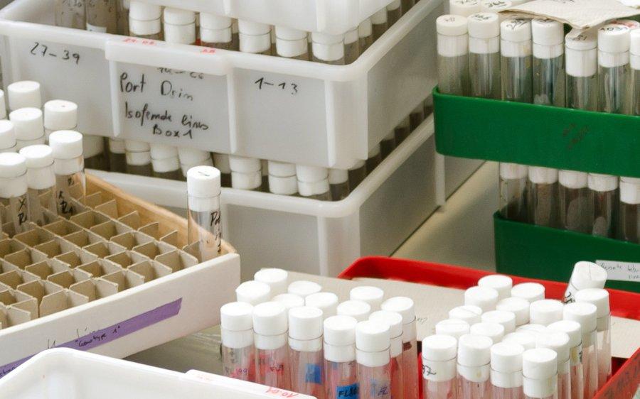 Im Labor leben die Fruchtfliegen in kleinen Glasgefäßen