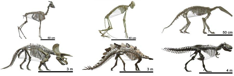 3-D-Simulationen von Tierskeletten von der Urzeit bis heute.