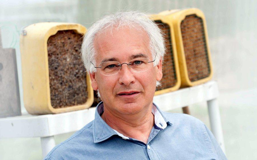 Prof. Manfred Ayasse forscht am Institut für Evolutionsökologie und Naturschutzgenomik der Universität Ulm