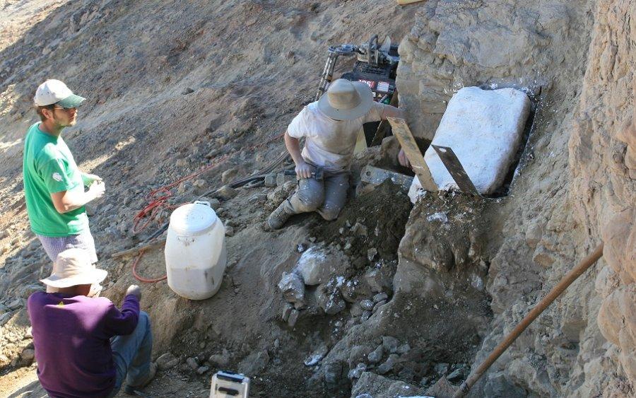 Zur Stabilisierung eingegipster Block der Schildkrötenschicht vor der Bergung
