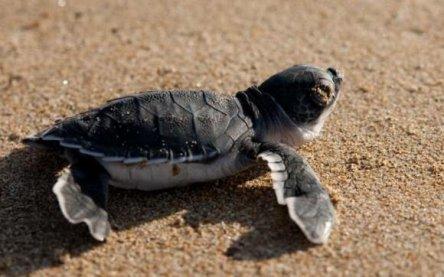 Freiwillige für Meeresschildkröten-Schutzprojekt in Nordzypern ...