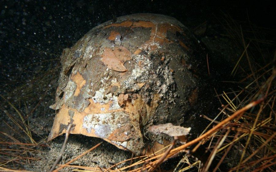 Von der Riesenschildkröte sind auf den Bahamas nur noch fossile Überreste übrig, die in sogenannten 'Blauen Löchern' konserviert wurden.