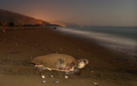 Strand-Sharing mit Meeresschildkröten | VET-MAGAZIN.com