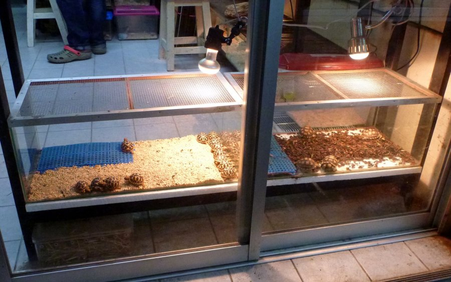 A pet shop in Chatuchak market selling tortoises