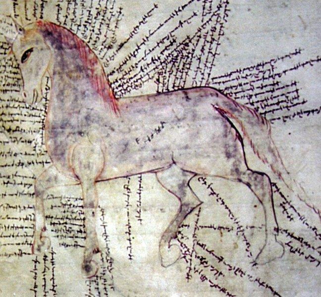 Originalskizze mit handschriftlichen Anmerkungen aus dem Kilikischen Heilbuch für Pferde, verfasst in Armenien in den Jahren 1295 bis 1298