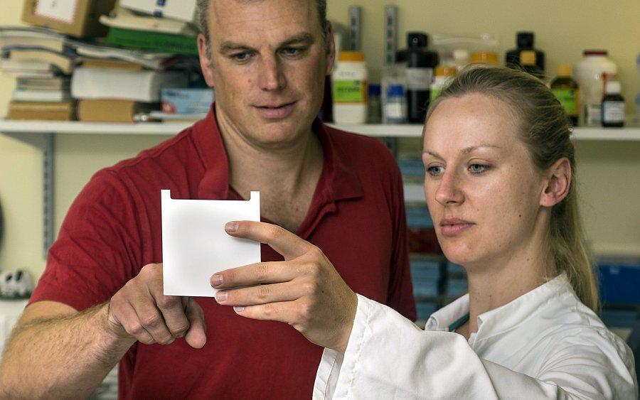 PD Dr. Joachim Weitzel, hier im Labor mit Ana Andrzejeski aus Brasilien, hat Rinderzellen molekularbiologisch untersucht.