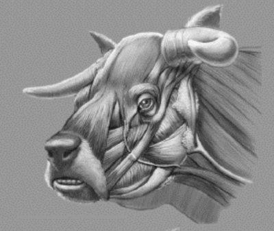 Großtiermedizin: Rinder | VET-MAGAZIN.com