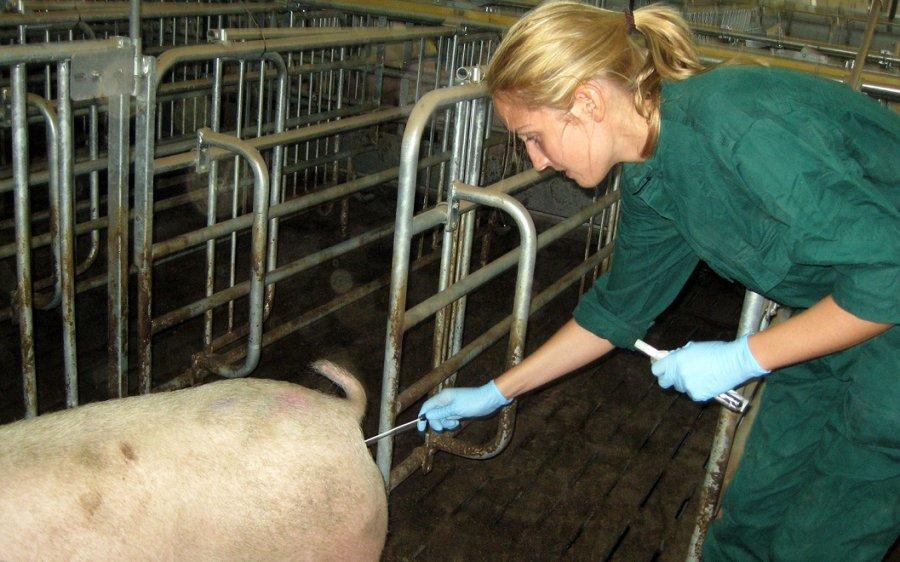 Dr. Ricarda Schmithausen überprüft durch die Entnahme mikrobieller Proben, ob die Desinfektions-Maßnahmen Erfolg hatten