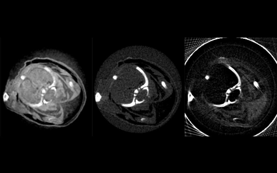 Röntgenaufnahme einer Maus: normales Röntgenbild (Absoprtion), Phasenkontrast- und Dunkelfeldaufnahme (vlnr)