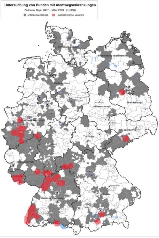 Regionale geografische Verbreitung (Cluster) von Angiostrongylus vasorum in Hunden in Deutschland