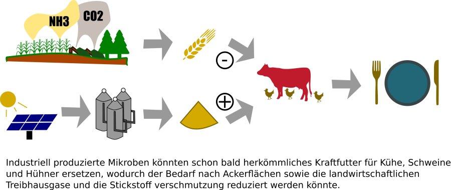Industriell produzierte Mikroben könnten schon bald herkömmliches Kraftfutter für Kühe, Schweine und Hühner ersetzen, dadurch würden Umweltschäden verringert.