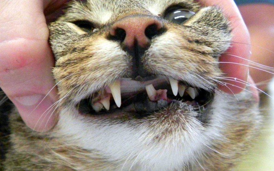 Bild 9: die Katze zwei Wochen nach der Operation