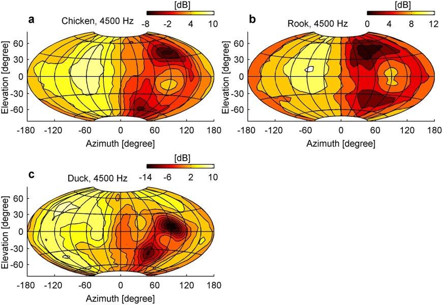 Die Bilder zeigen, wie bei Huhn, Ente und Krähe die Lautstärke am rechten Ohr bei Geräuschen aus verschiedenen Richtungen variiert
