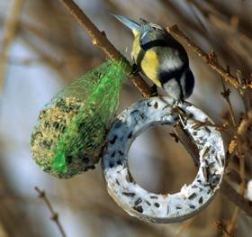 der kleinste vogel hat den gr ten hunger vet. Black Bedroom Furniture Sets. Home Design Ideas