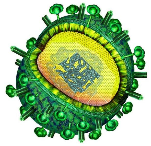 Schematische Darstellung des Influenza-Virus - Bild 1 von 1 | VET ...