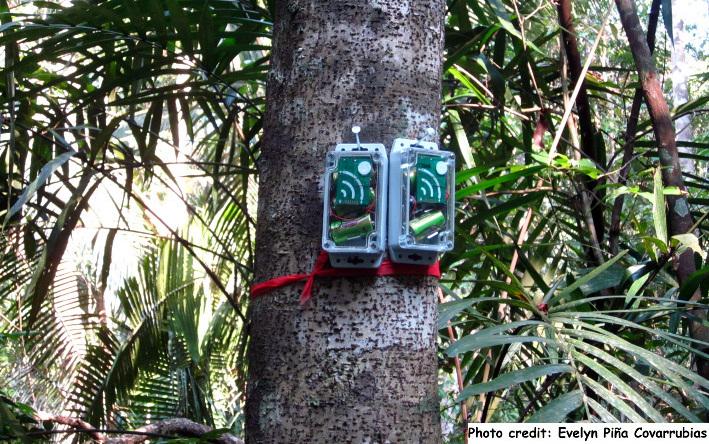 Ein Netzwerk aus kleinen akustischen Überwachungsgeräten warnt Ranger bei Schüssen und den Geräuschen von Kettensägen.