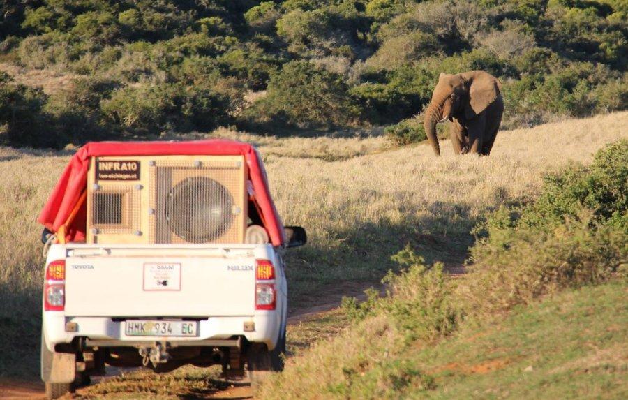Mit einem 300 kg schweren Subwoofer gingen die KognitionsbiologInnen der Kommunikation unter Elefanten auf den Grund