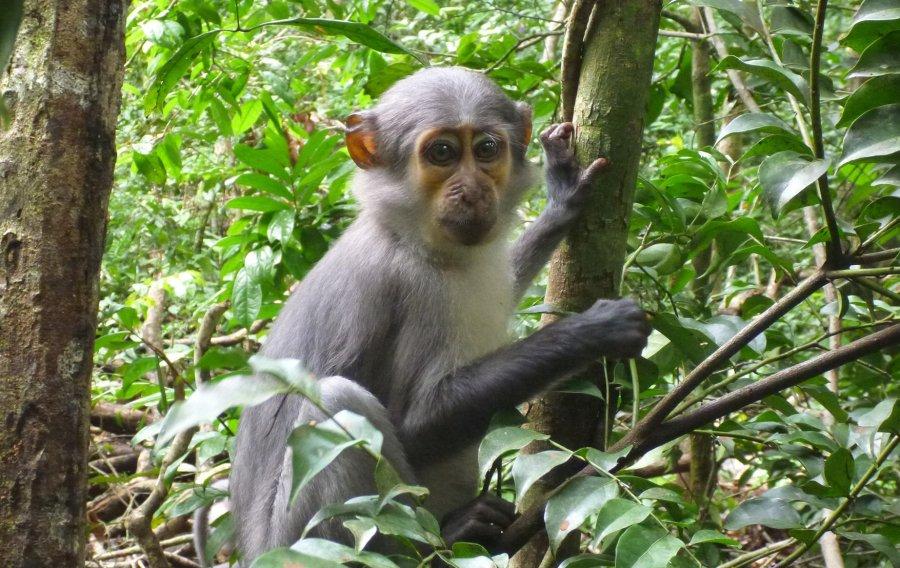 Fliegenschwärme folgen Rußmangaben durch den Regenwald und könnten unter den Tieren Krankheiten verbreiten.