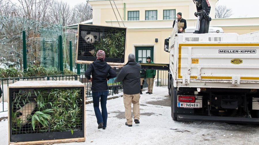 Die Transport-Kisten werden aus dem Gehege im Tiergarten gehoben