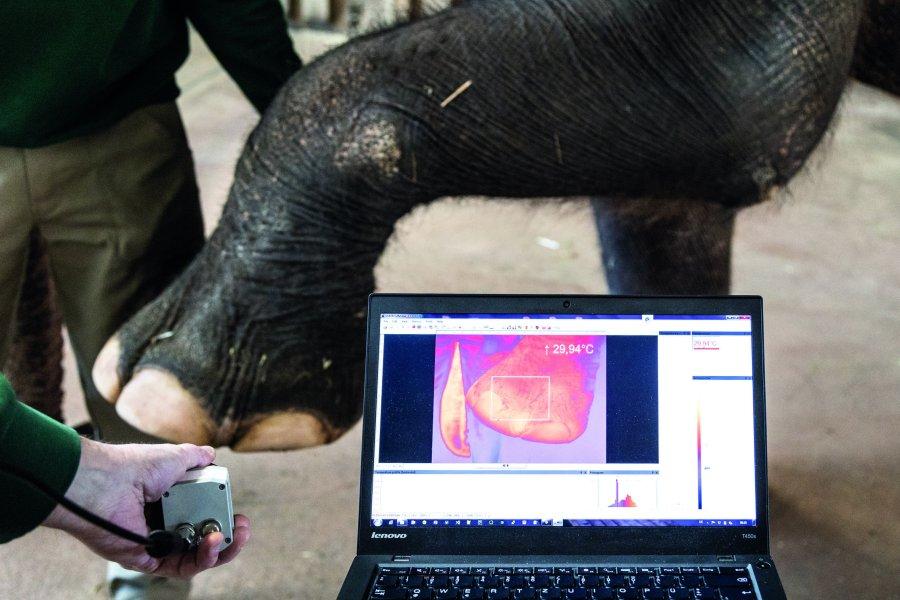 Ziel des Projekts ist eine umfangreiche Bilddatenbank mit Wärmebildern, die Tierärzten bei der Diagnose hilft und kranken Tieren unnötigen Stress erspart.